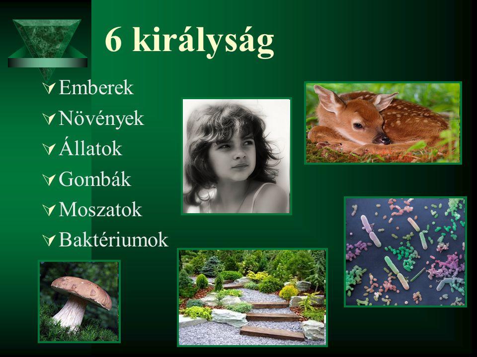 6 királyság Emberek Növények Állatok Gombák Moszatok Baktériumok