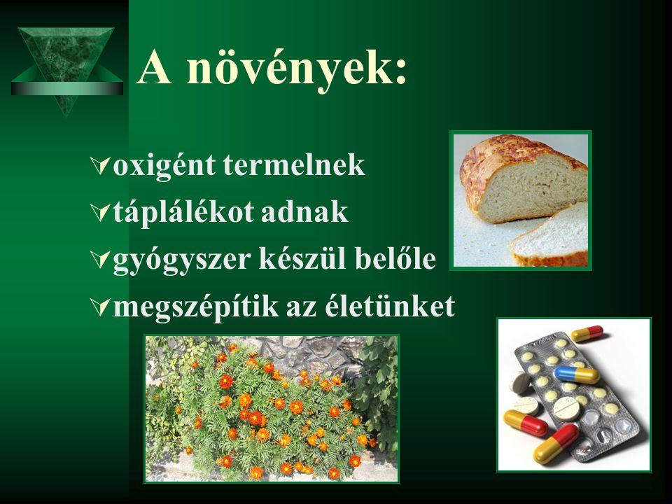 A növények: oxigént termelnek táplálékot adnak gyógyszer készül belőle