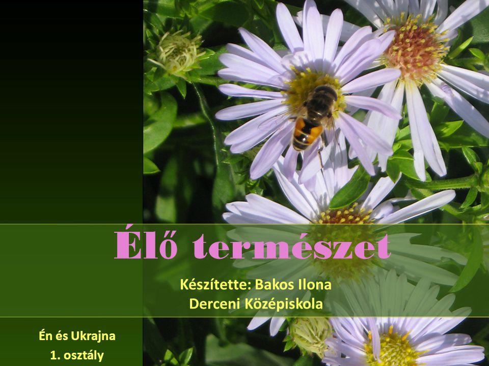 Készítette: Bakos Ilona Derceni Középiskola