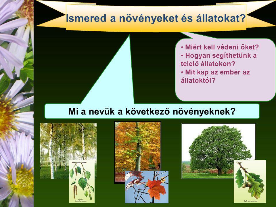 Ismered a növényeket és állatokat Mi a nevük a következő növényeknek