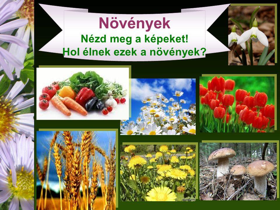 Növények Nézd meg a képeket! Hol élnek ezek a növények
