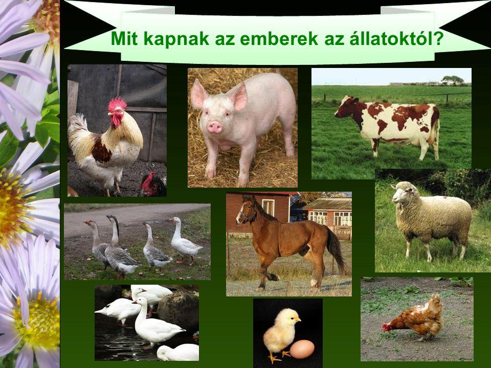 Mit kapnak az emberek az állatoktól