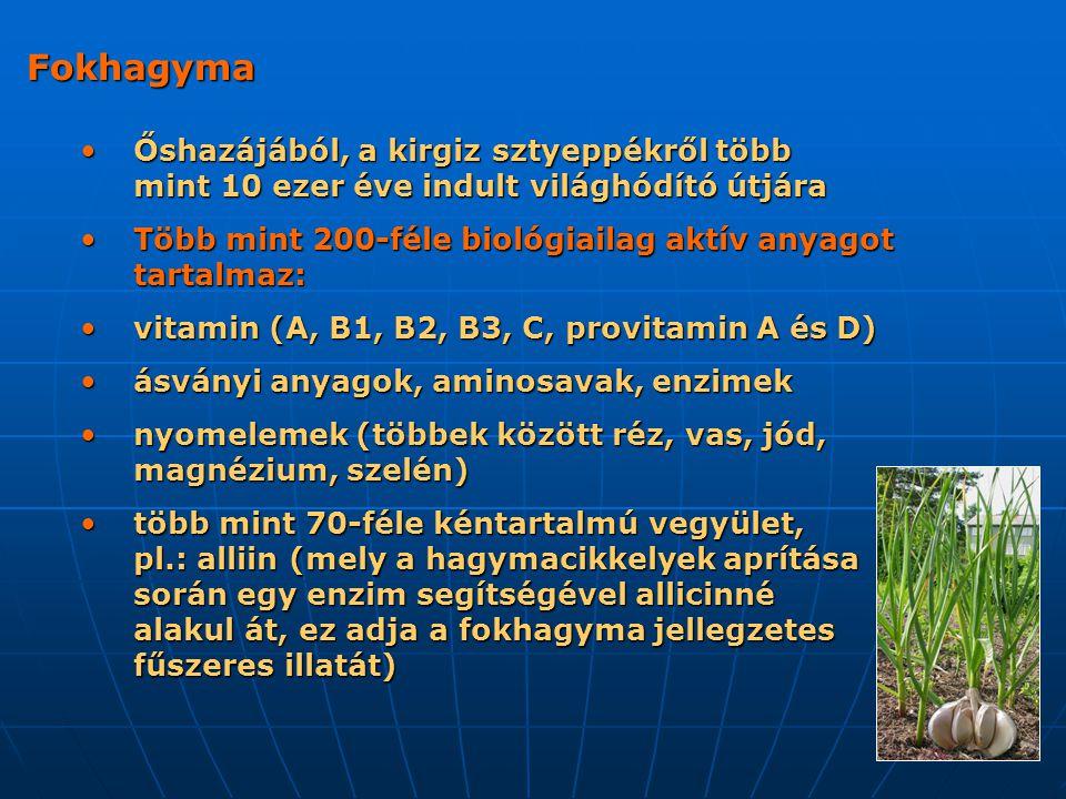 Fokhagyma Őshazájából, a kirgiz sztyeppékről több mint 10 ezer éve indult világhódító útjára.