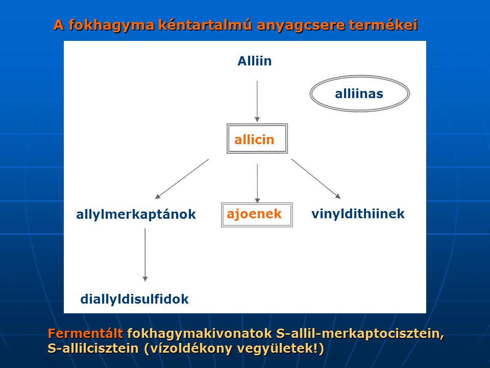 A fokhagyma kéntartalmú anyagcsere termékei