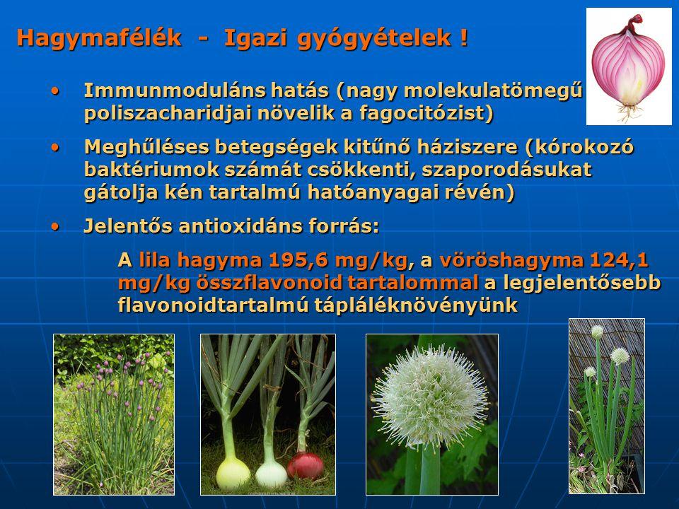 Hagymafélék - Igazi gyógyételek !