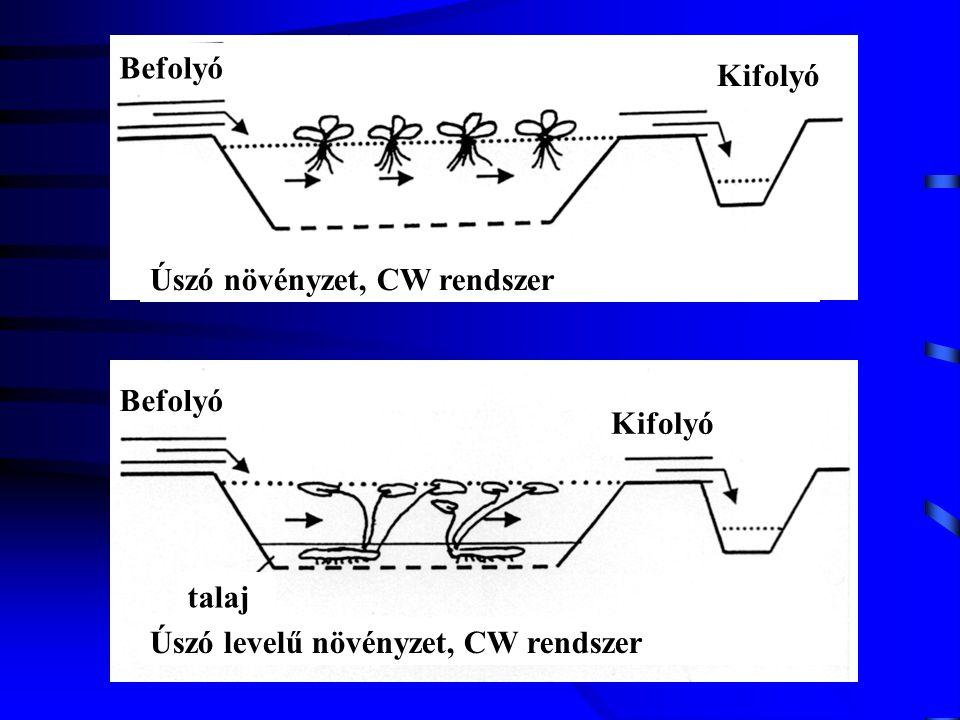 Befolyó Kifolyó. Úszó növényzet, CW rendszer. Befolyó.