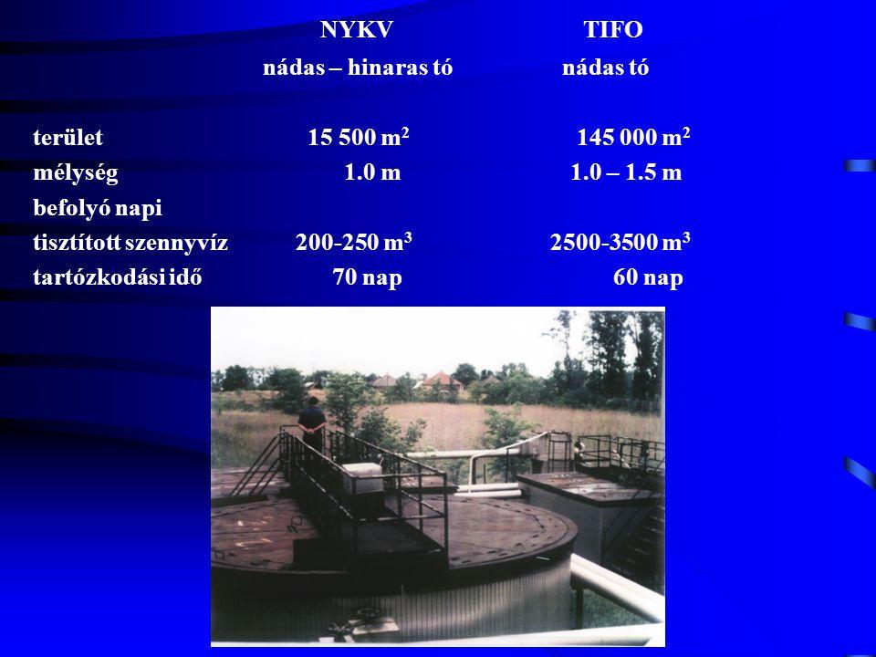 NYKV TIFO nádas – hinaras tó nádas tó terület 15 500 m2 145 000 m2