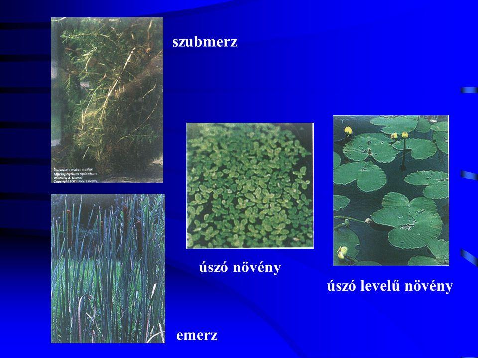 szubmerz úszó növény úszó levelű növény emerz