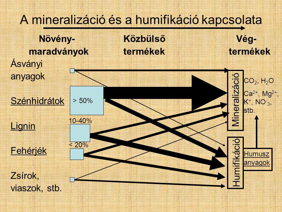 A mineralizáció és a humifikáció kapcsolata