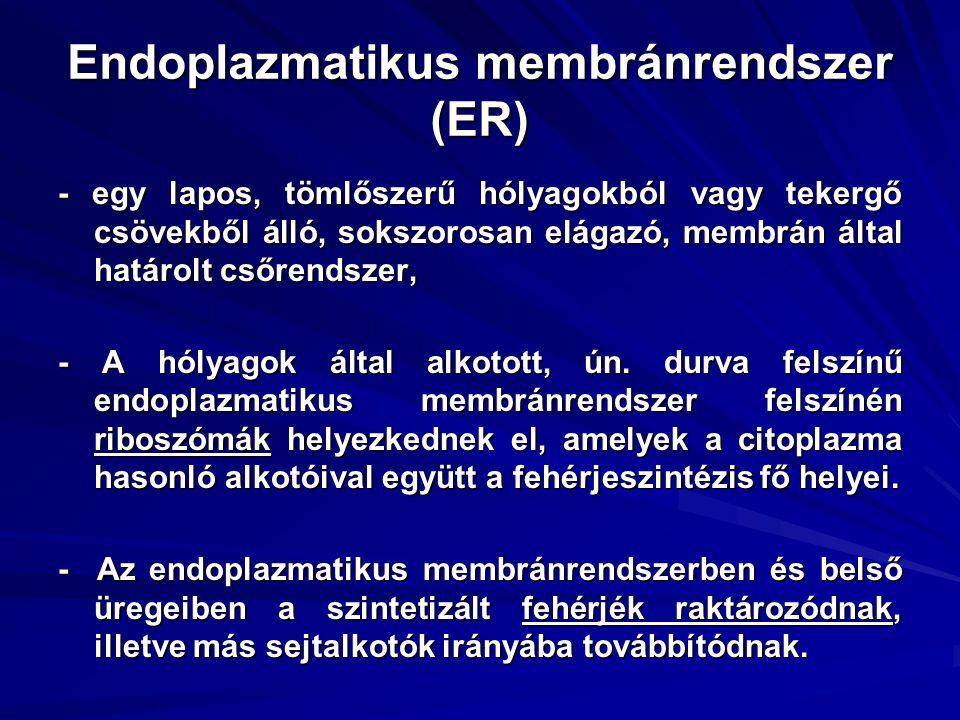 Endoplazmatikus membránrendszer (ER)