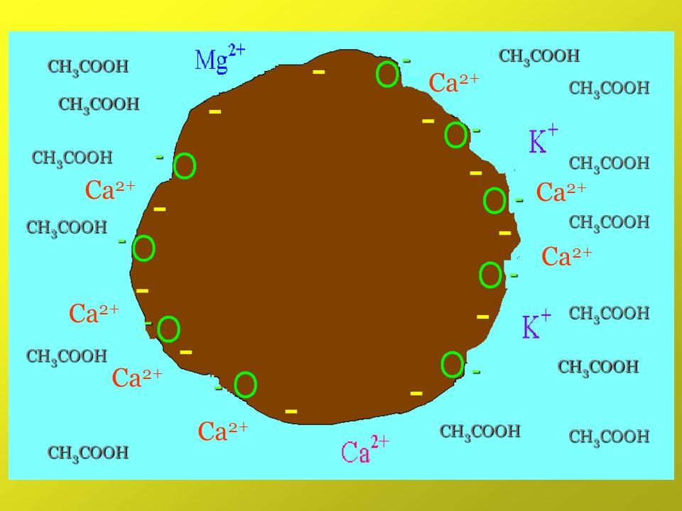 Ca2+ Ca2+ Ca2+ Ca2+ Ca2+ Ca2+ Ca2+ - - - - - - - - - CH3COOH CH3COOH