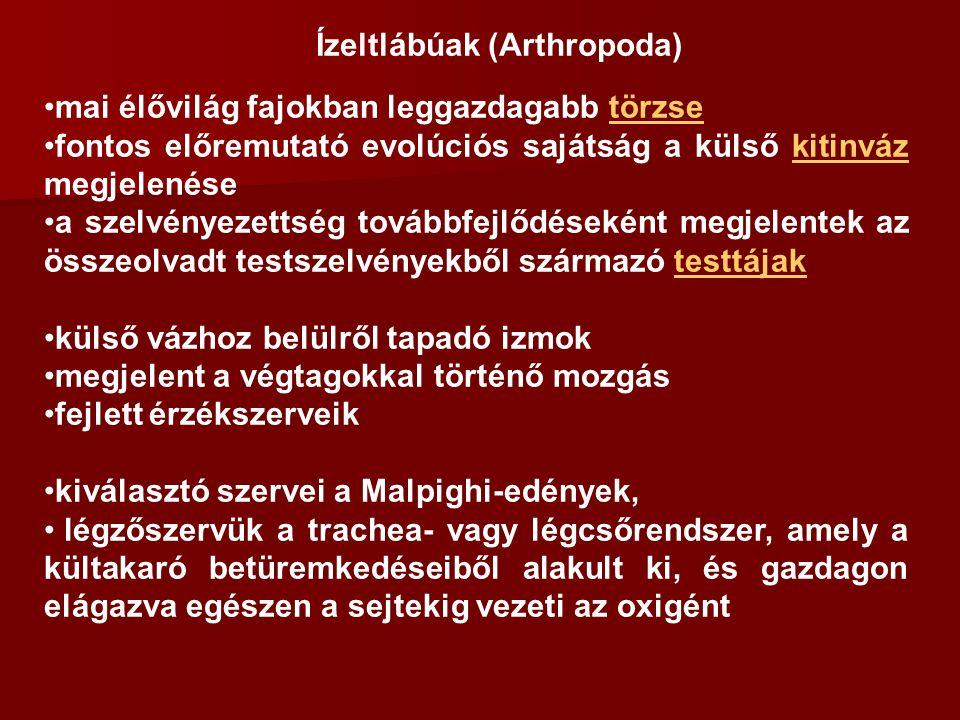 Ízeltlábúak (Arthropoda)