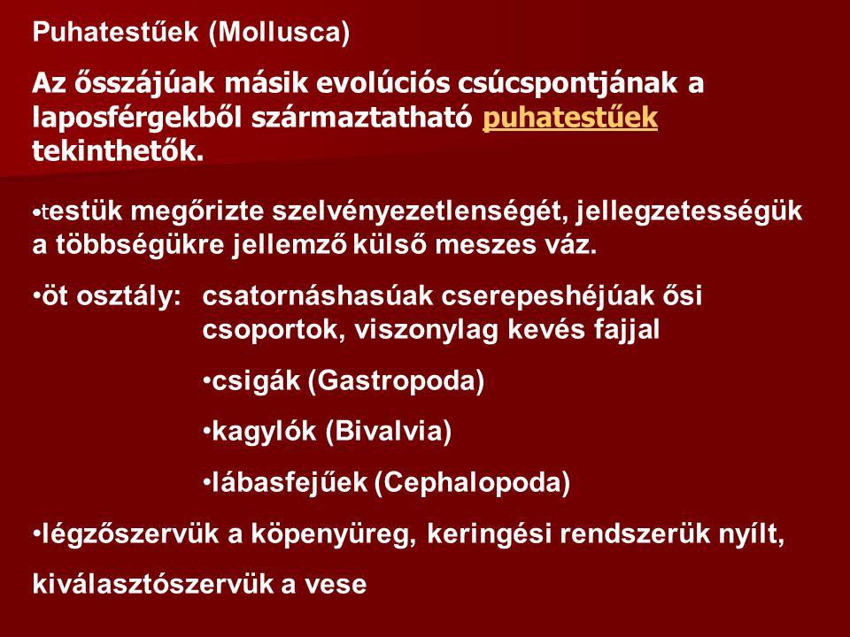 Puhatestűek (Mollusca)