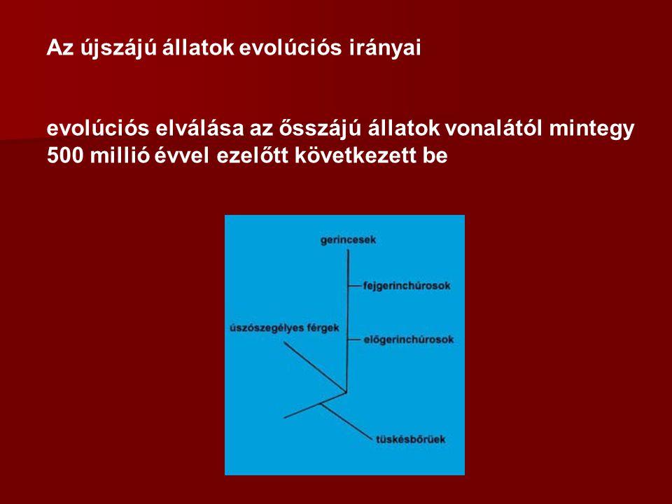 Az újszájú állatok evolúciós irányai