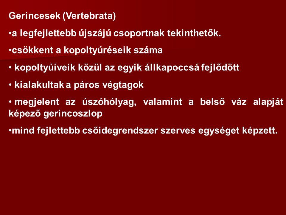 Gerincesek (Vertebrata)