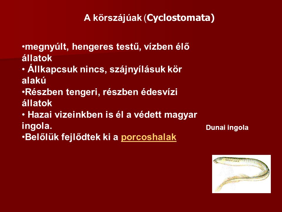 A körszájúak (Cyclostomata)
