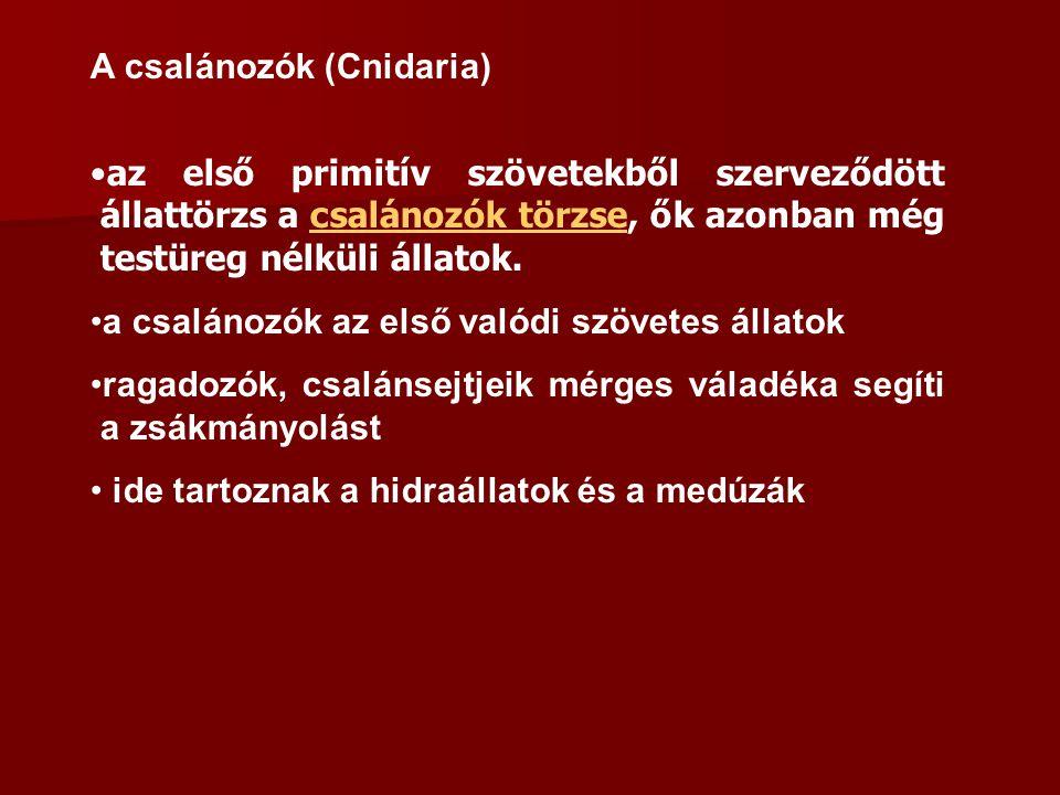 A csalánozók (Cnidaria)