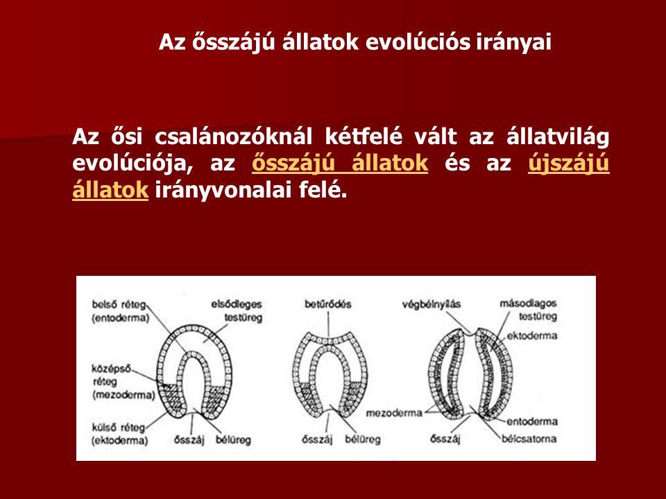 Az ősszájú állatok evolúciós irányai