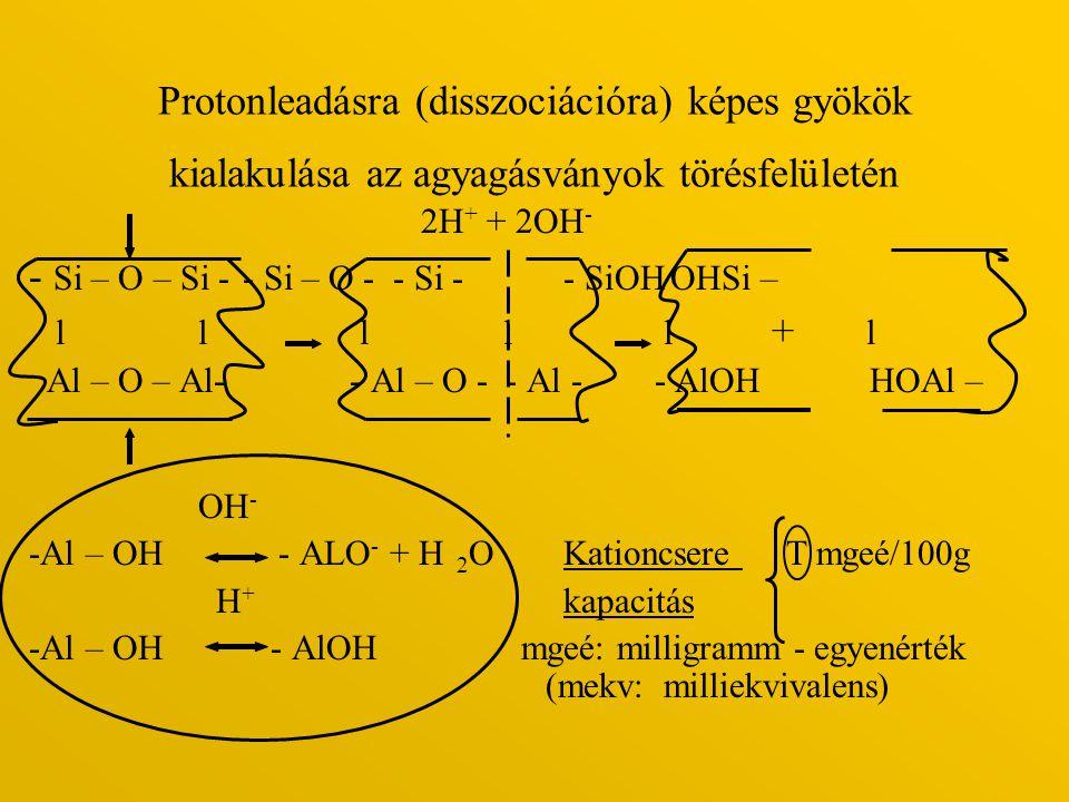 Protonleadásra (disszociációra) képes gyökök kialakulása az agyagásványok törésfelületén