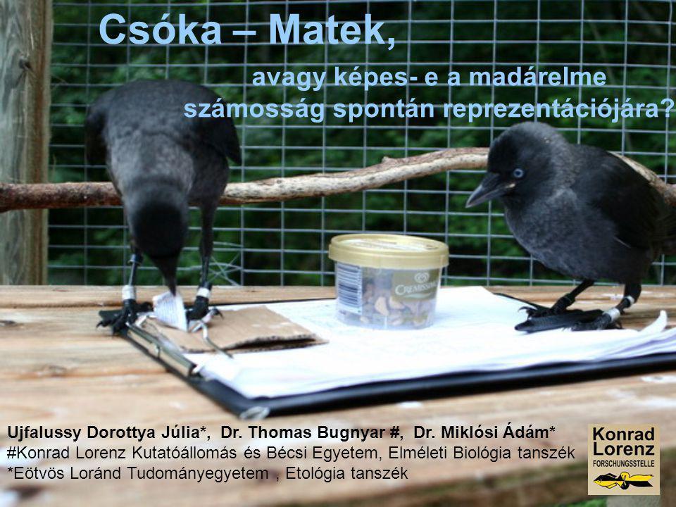 avagy képes- e a madárelme számosság spontán reprezentációjára