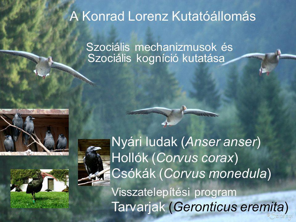 A Konrad Lorenz Kutatóállomás