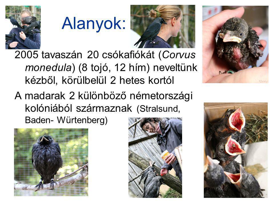 Alanyok: 2005 tavaszán 20 csókafiókát (Corvus monedula) (8 tojó, 12 hím) neveltünk kézből, körülbelül 2 hetes kortól.