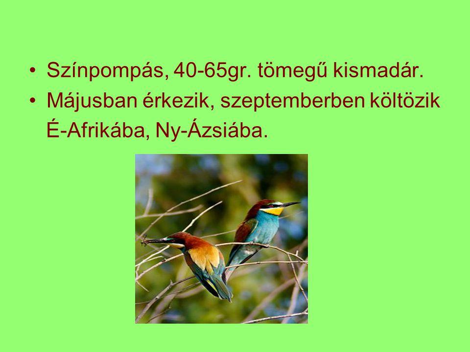 Színpompás, 40-65gr. tömegű kismadár.
