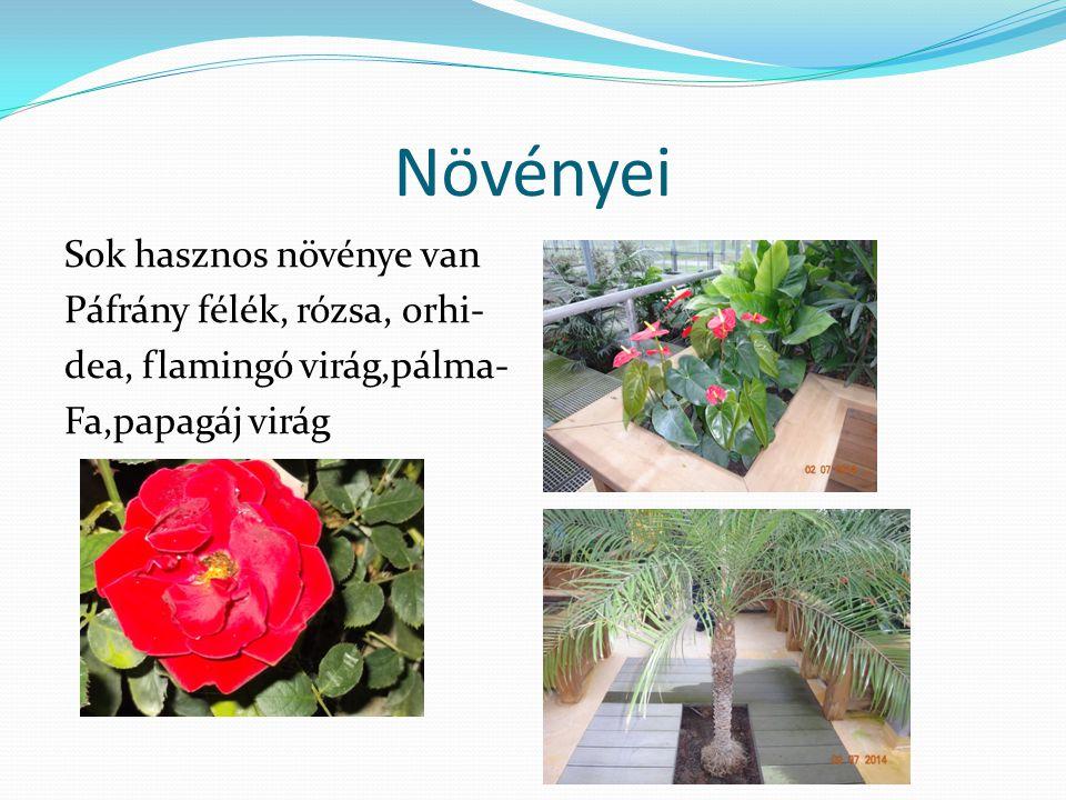 Növényei Sok hasznos növénye van Páfrány félék, rózsa, orhi-