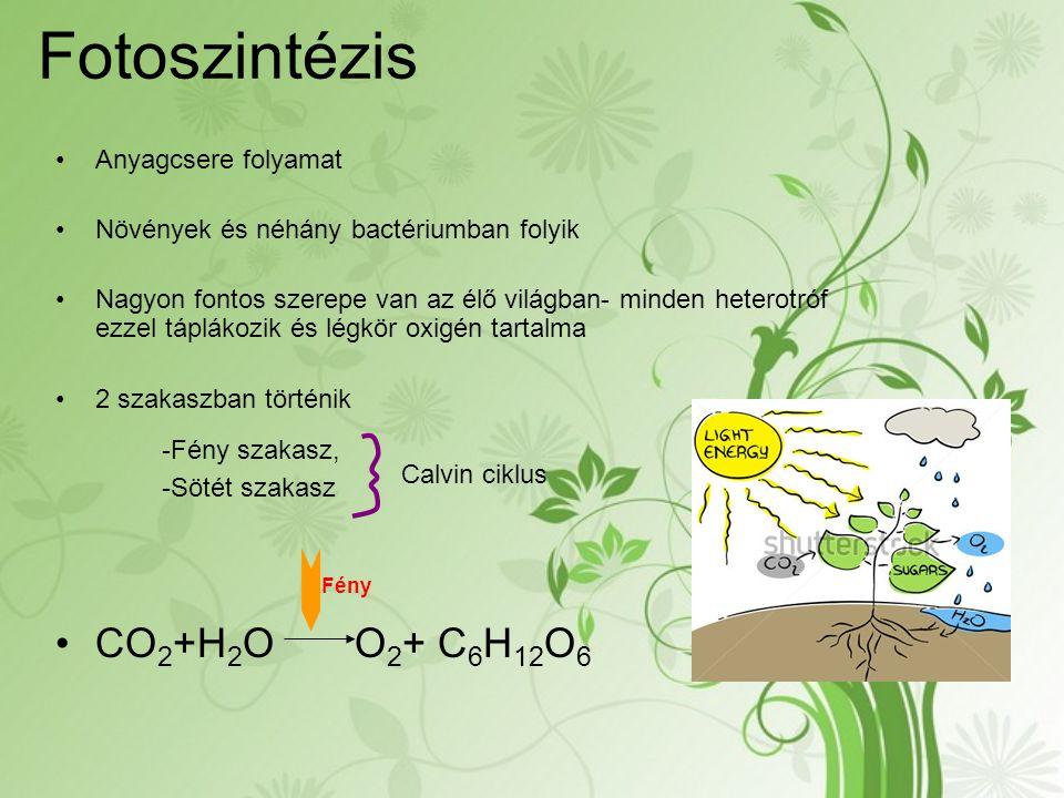 Fotoszintézis -Fény szakasz, CO2+H2O O2+ C6H12O6 Anyagcsere folyamat