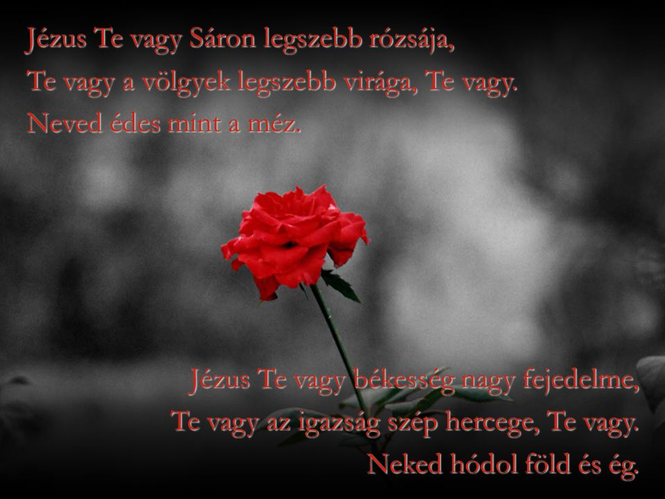 Jézus Te vagy Sáron legszebb rózsája,