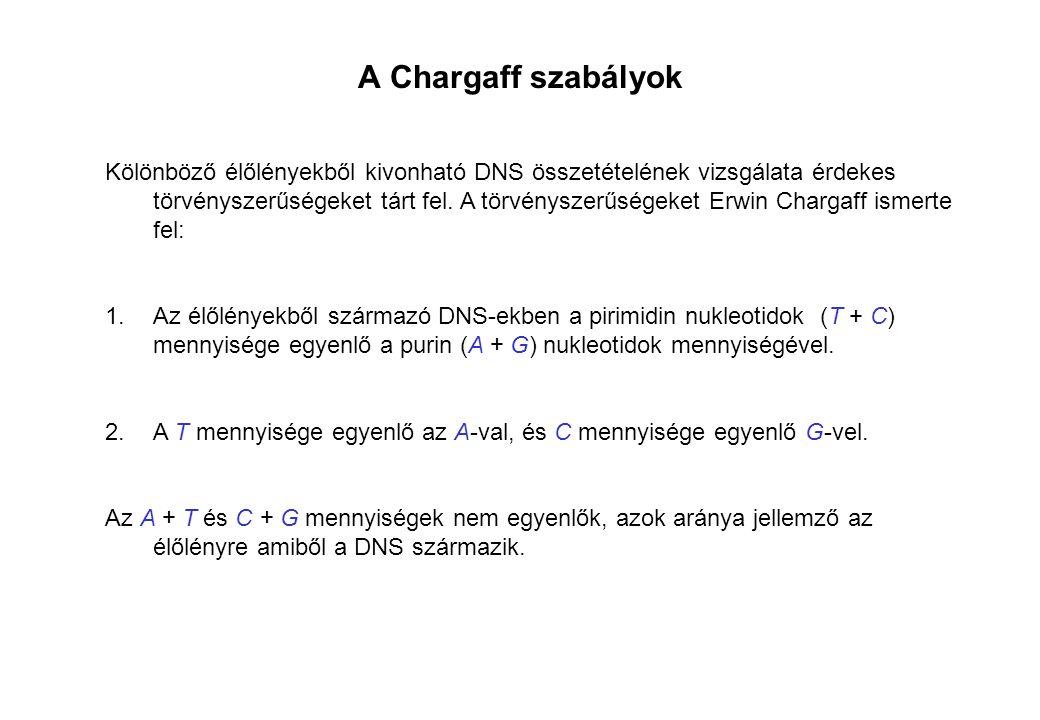 A Chargaff szabályok