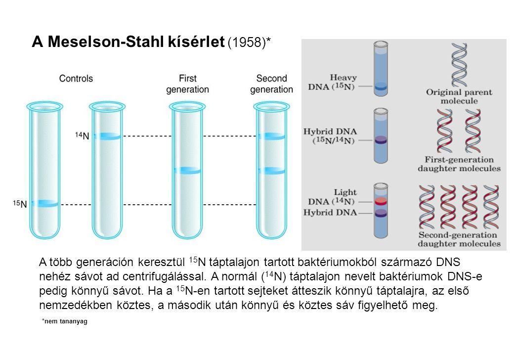 A Meselson-Stahl kísérlet (1958)*
