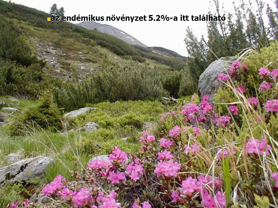 az endémikus növényzet 5.2%-a itt található