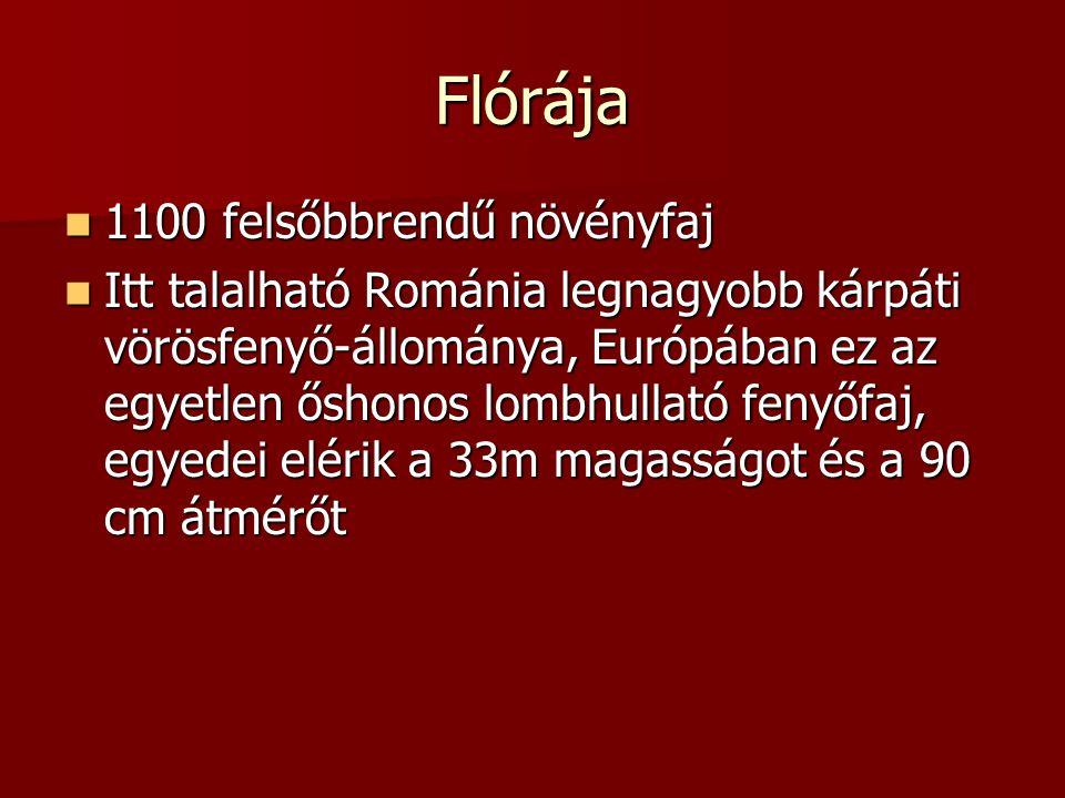 Flórája 1100 felsőbbrendű növényfaj