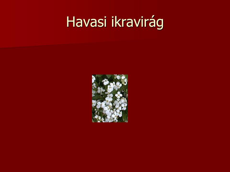 Havasi ikravirág