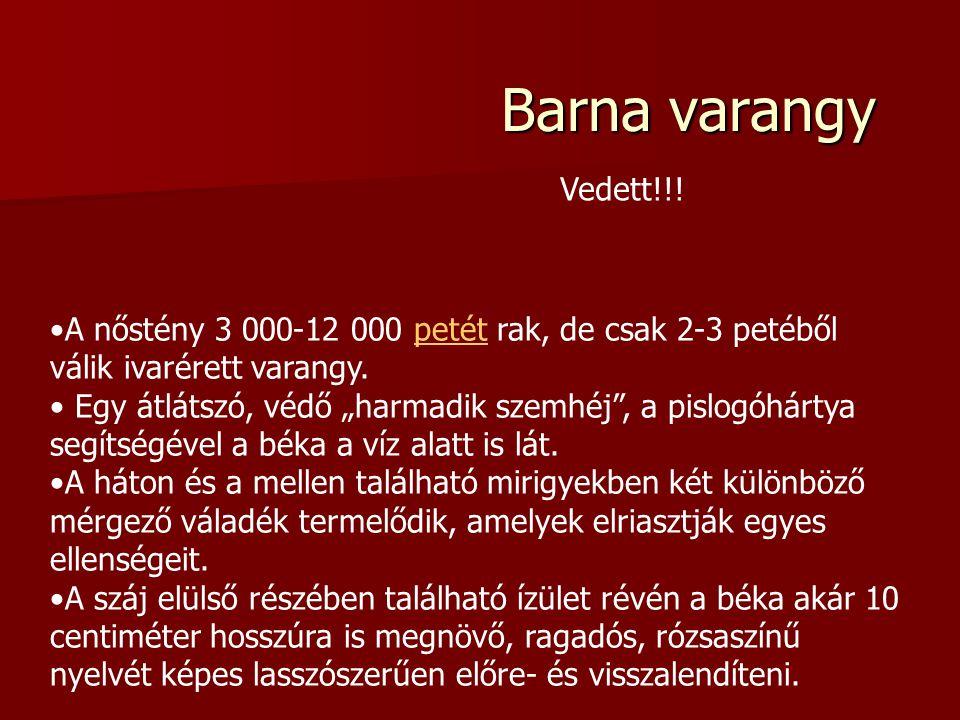 Barna varangy Vedett!!! A nőstény 3 000-12 000 petét rak, de csak 2-3 petéből válik ivarérett varangy.