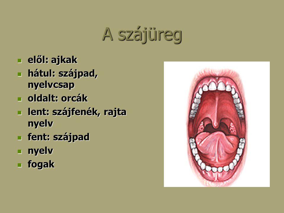 A szájüreg elől: ajkak hátul: szájpad, nyelvcsap oldalt: orcák