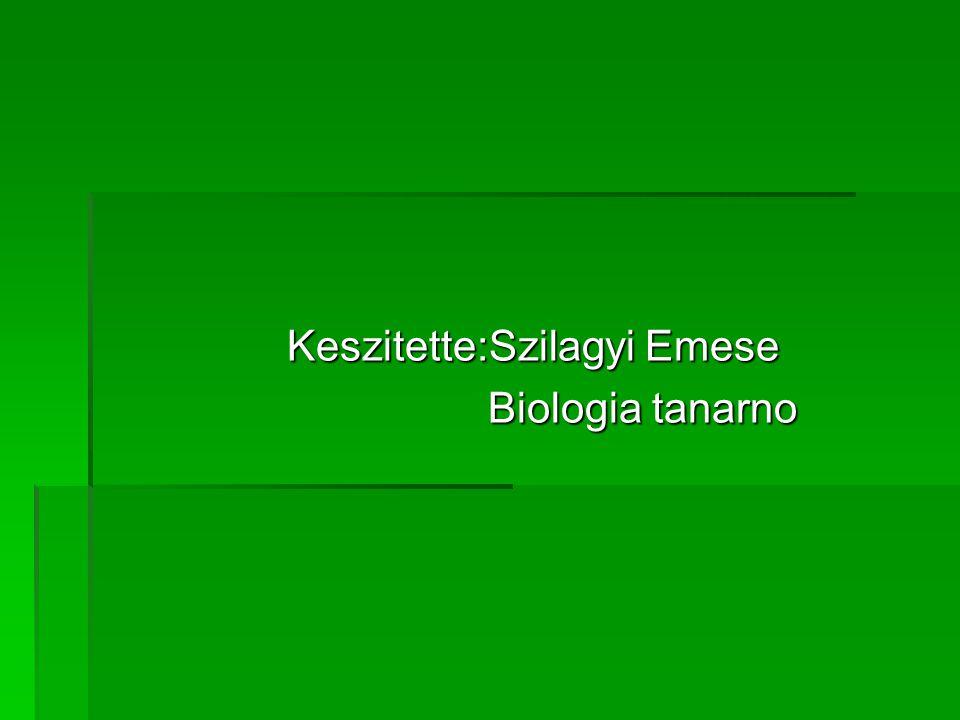 Keszitette:Szilagyi Emese