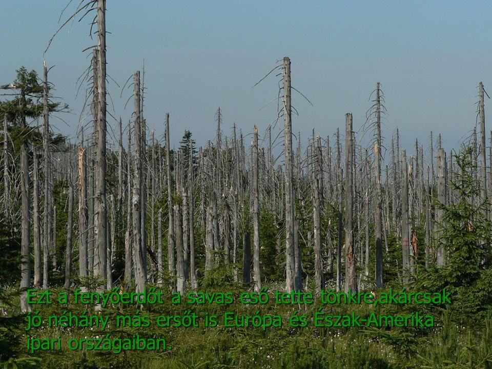Ezt a fenyőerdőt a savas eső tette tönkre,akárcsak jó néhány más ersőt is Európa és Észak-Amerika ipari országaiban.