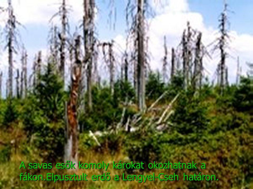 A savas esők komoly károkat okozhatnak a fákon