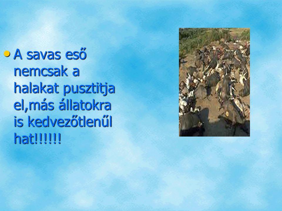 A savas eső nemcsak a halakat pusztitja el,más állatokra is kedvezőtlenűl hat!!!!!!