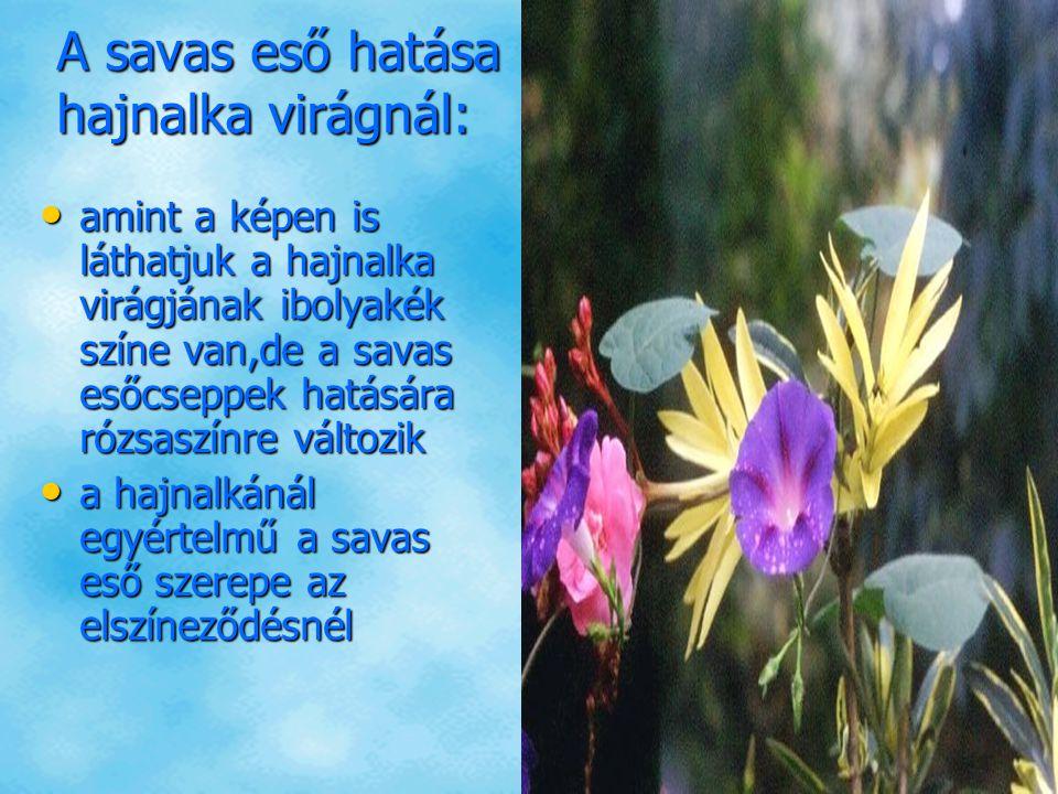 A savas eső hatása hajnalka virágnál: