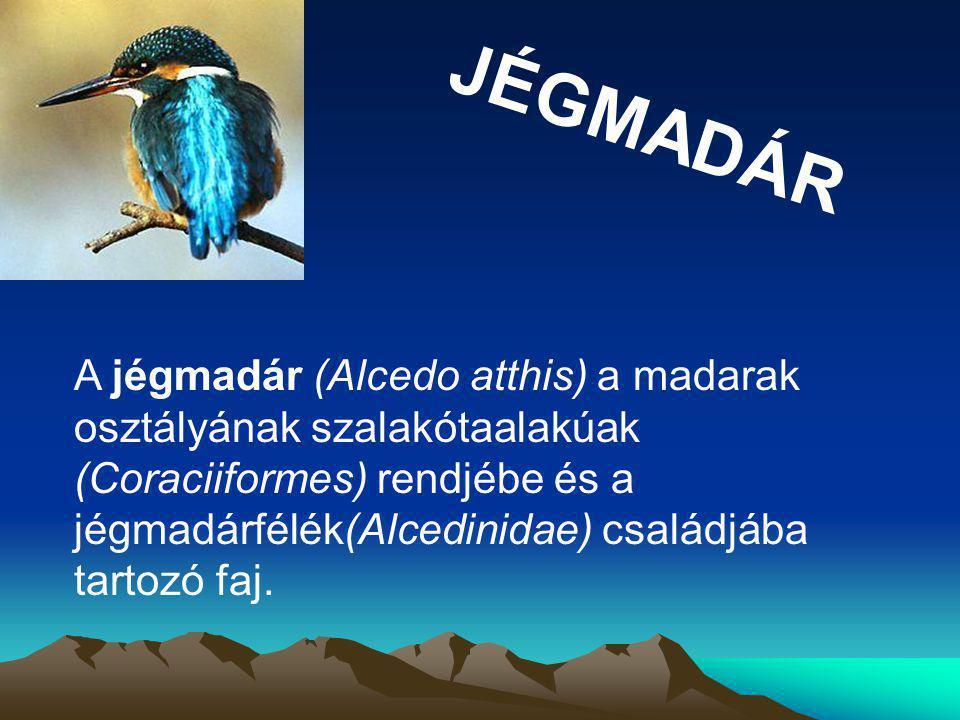 JÉGMADÁR