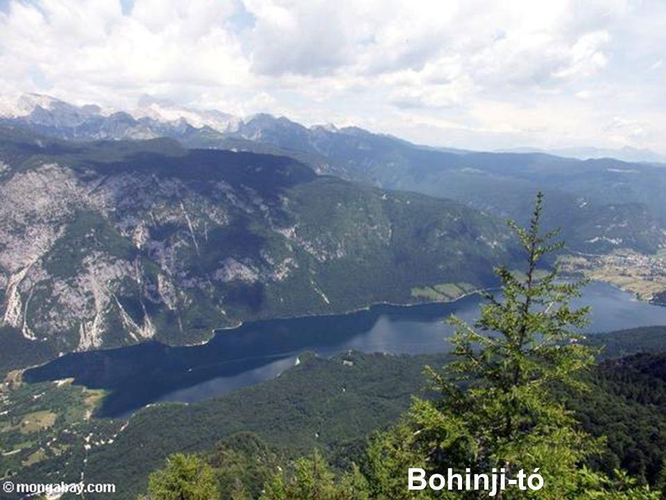 Bohinji-tó