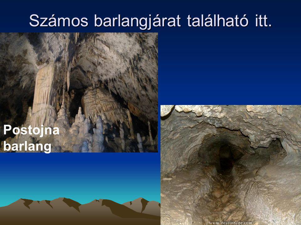 Számos barlangjárat található itt.