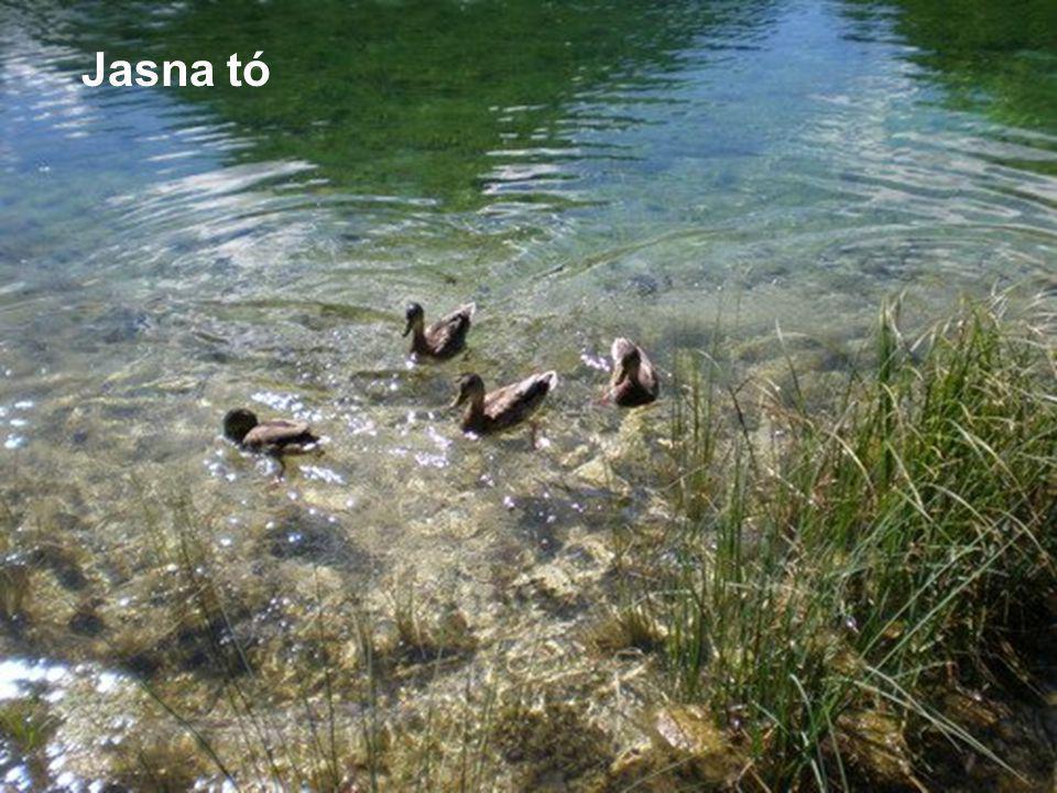 Jasna tó