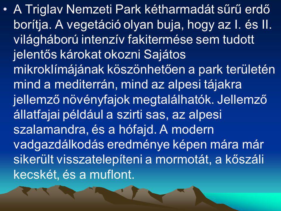 A Triglav Nemzeti Park kétharmadát sűrű erdő borítja