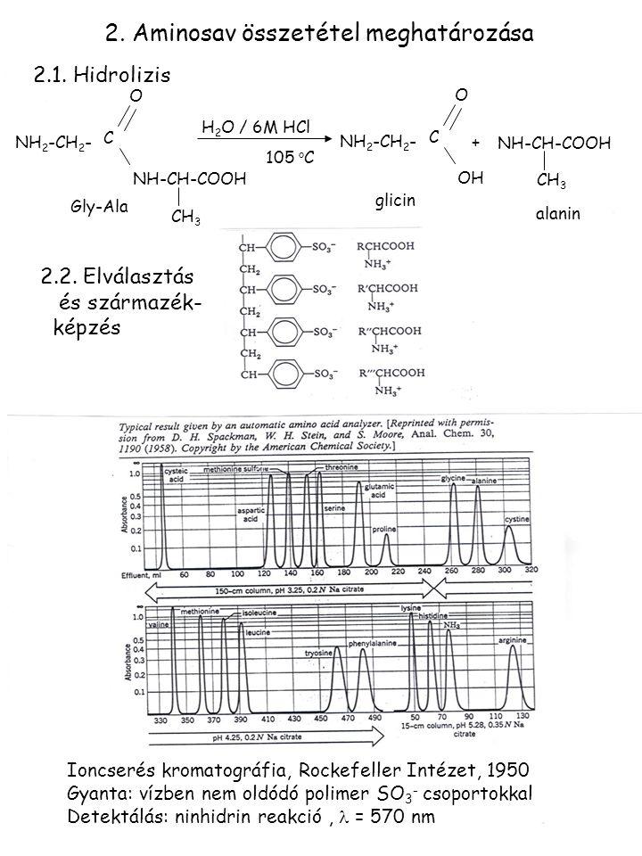 2. Aminosav összetétel meghatározása