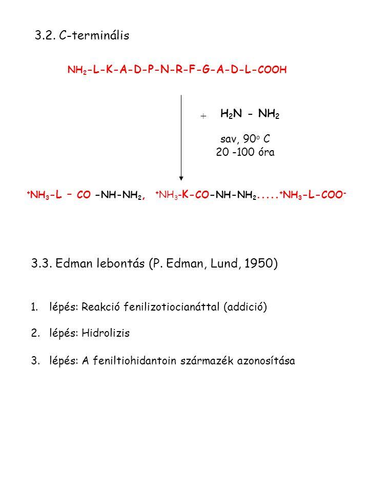 3.3. Edman lebontás (P. Edman, Lund, 1950)