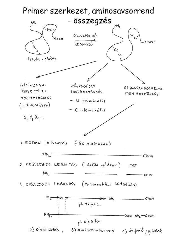 Primer szerkezet, aminosavsorrend
